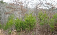Land for sale in Brasstown, NC