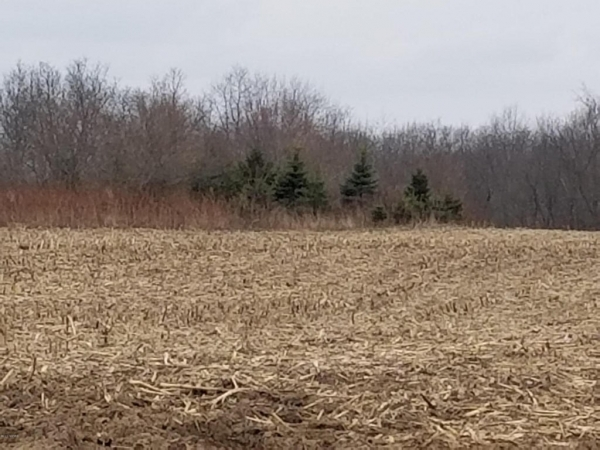 Listing Image #3 - Land for sale at apro 10800 Sheridan, Fenwick MI 48834
