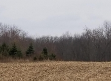 Listing Image #1 - Land for sale at apro 10800 Sheridan, Fenwick MI 48834