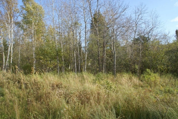 Listing Image #3 - Land for sale at 3730 M-134, Cedarville MI 49719