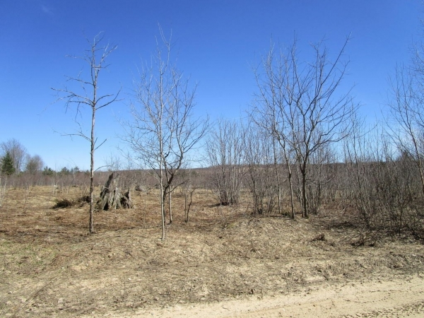 Listing Image #2 - Land for sale at Tittabawasse Trail 10.07 acres, Gaylord MI 49735