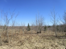 Listing Image #3 - Land for sale at Tittabawasse Trail 10.07 acres, Gaylord MI 49735