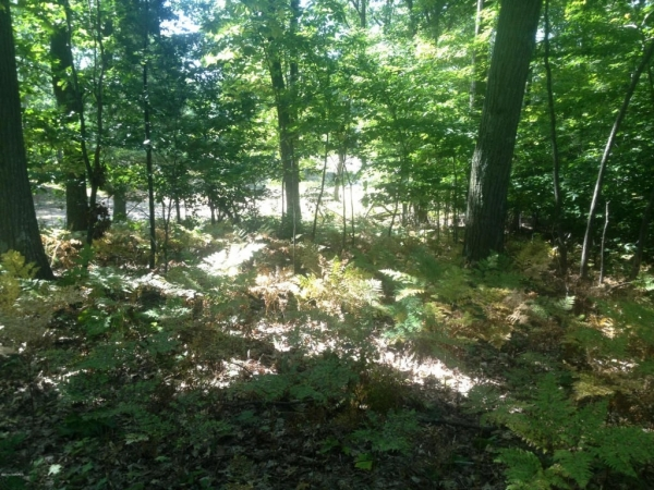 Listing Image #2 - Land for sale at 22 - Lot Timberlake Terrace, Mears MI 49436