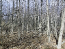 Listing Image #3 - Land for sale at 0 122nd Avenue, Fennville MI 49408