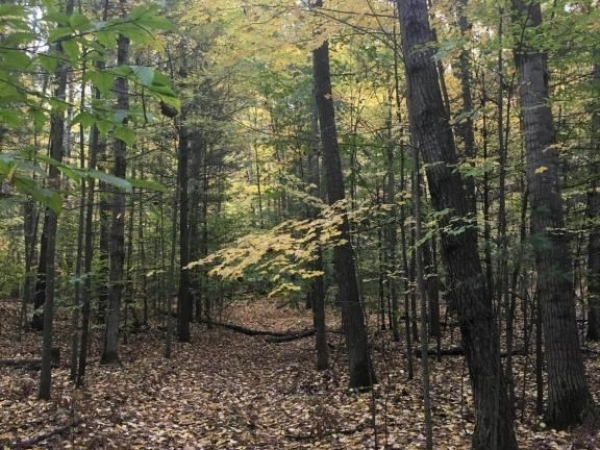 Listing Image #2 - Land for sale at E 4 1/2 Mile Road, Luther MI 49656