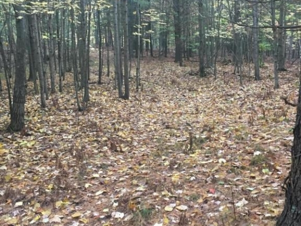 Listing Image #3 - Land for sale at E 4 1/2 Mile Road, Luther MI 49656