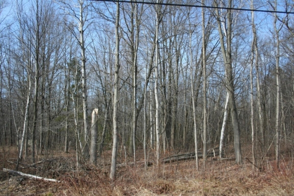 Listing Image #3 - Land for sale at VL Birch Lane, Pentwater MI 49449