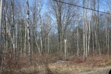 Listing Image #2 - Land for sale at VL Birch Lane, Pentwater MI 49449