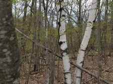 Listing Image #3 - Land for sale at 0 Armlin hill, Middleburgh NY 12122