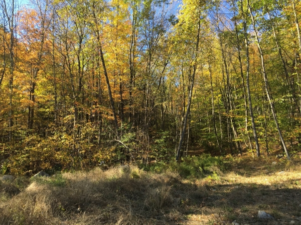 Listing Image #3 - Land for sale at 14 JASMINE RD, Stephentown NY 12168