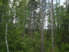 Listing Image #1 - Land for sale at TBD M69, Perronville MI 49873