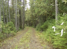 Listing Image #3 - Land for sale at 0 Dukes RD, Moran MI 49760