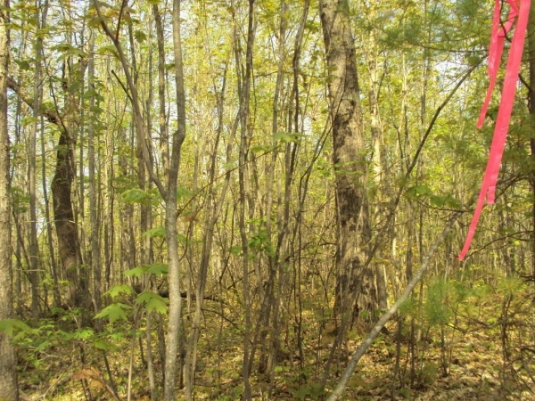 Listing Image #3 - Land for sale at Spikehorn Trail PAR 20, Indian River MI 49749