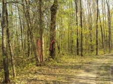 Listing Image #1 - Land for sale at Spikehorn Trail PAR 20, Indian River MI 49749