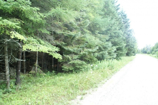 Listing Image #3 - Land for sale at 007 St. Martins Pt RD, Hessel MI 49745