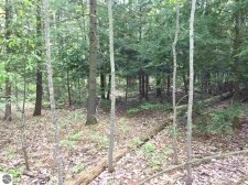 Listing Image #1 - Land for sale at Cathedral Avenue 064 & 066, Interlochen MI 49643