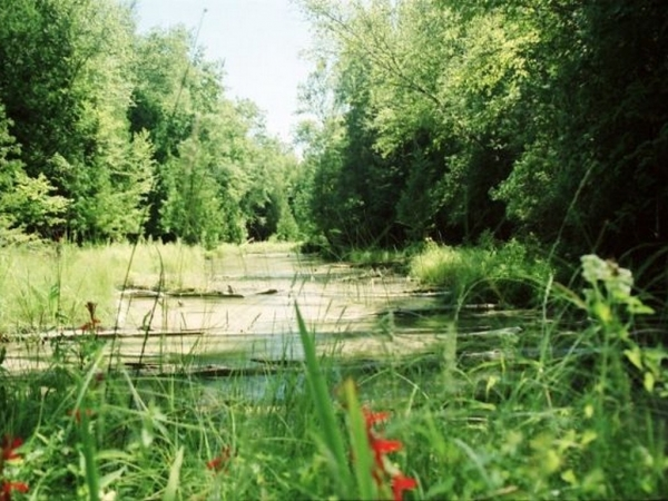 Listing Image #2 - Land for sale at 00 Michaels Woods Trail, Maple City MI 49664