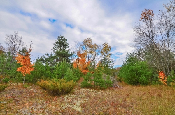 Listing Image #1 - Land for sale at 5 W King Fish Road, Empire MI 49630