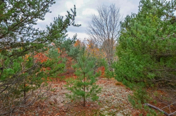 Listing Image #3 - Land for sale at 5 W King Fish Road, Empire MI 49630
