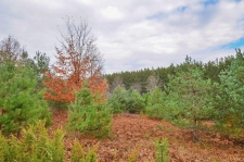 Listing Image #2 - Land for sale at 5 W King Fish Road, Empire MI 49630