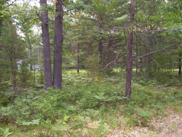 Listing Image #1 - Land for sale at XXX ANN ARBOR, Prudenville MI 48651