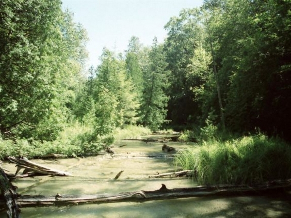Listing Image #1 - Land for sale at 00 Michaels Woods Trail, Maple City MI 49664