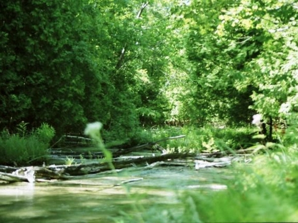 Listing Image #3 - Land for sale at 00 Michaels Woods Trail, Maple City MI 49664