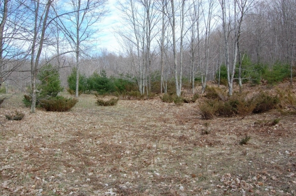 Listing Image #1 - Land for sale at S Beaver Pond Road, Empire MI 49630