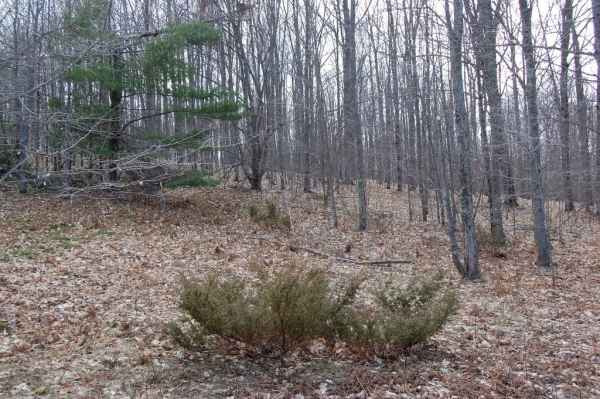 Listing Image #2 - Land for sale at S Beaver Pond Road, Empire MI 49630