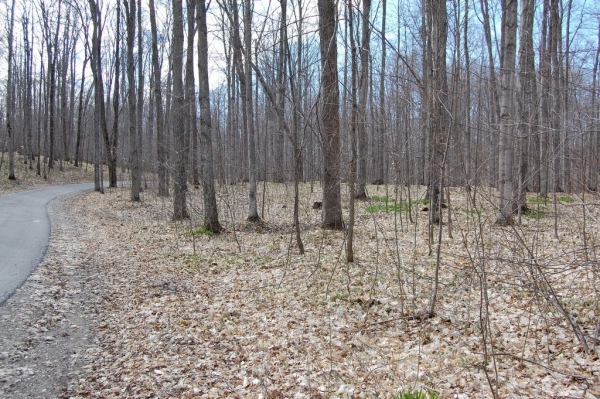 Listing Image #3 - Land for sale at S Beaver Pond Road, Empire MI 49630