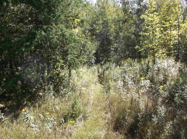 Listing Image #2 - Land for sale at TBD M35, Rock MI 49880