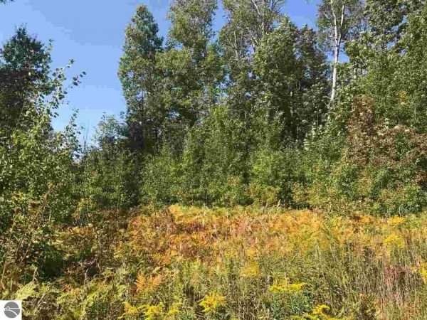 Listing Image #1 - Land for sale at Co Road 633, Grawn MI 49637