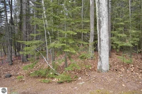 Listing Image #1 - Land for sale at Lot 49 Cherokee Trail, Kewadin MI 49648