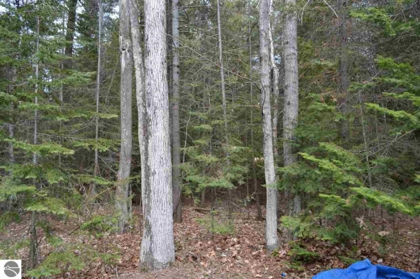 Listing Image #3 - Land for sale at Lot 49 Cherokee Trail, Kewadin MI 49648