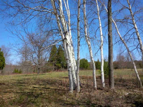 Listing Image #3 - Land for sale at Amon Meadows Lot #4, Alanson MI 49706