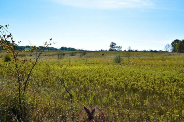 Listing Image #3 - Land for sale at 0 Willow Road, Saline MI 48176