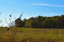 Listing Image #1 - Land for sale at 0 Willow Road, Saline MI 48176