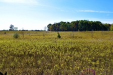 Listing Image #2 - Land for sale at 0 Willow Road, Saline MI 48176