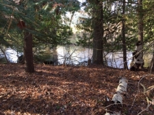 Listing Image #1 - Land for sale at XXX GIERKE RD, Grayling MI 49738