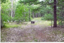 Land for sale in Baldwin, MI
