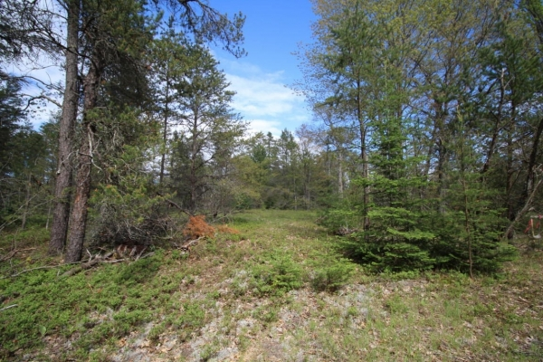 Listing Image #3 - Land for sale at Pine Trace Unit 7, Indian River MI 49749
