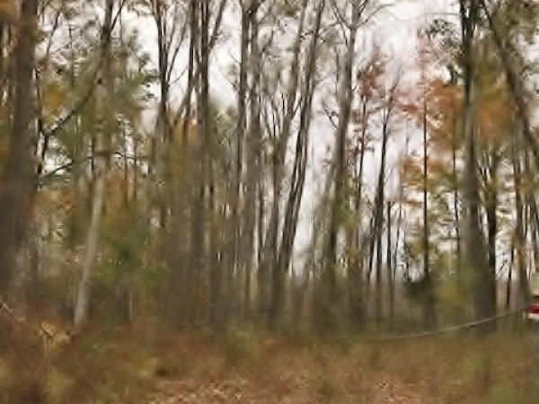 Listing Image #3 - Land for sale at 3375 HARDWOODS HEIGHTS, Prescott MI 48756