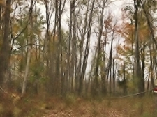 Listing Image #2 - Land for sale at 3375 HARDWOODS HEIGHTS, Prescott MI 48756