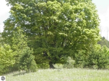 Land for sale in Tustin, MI