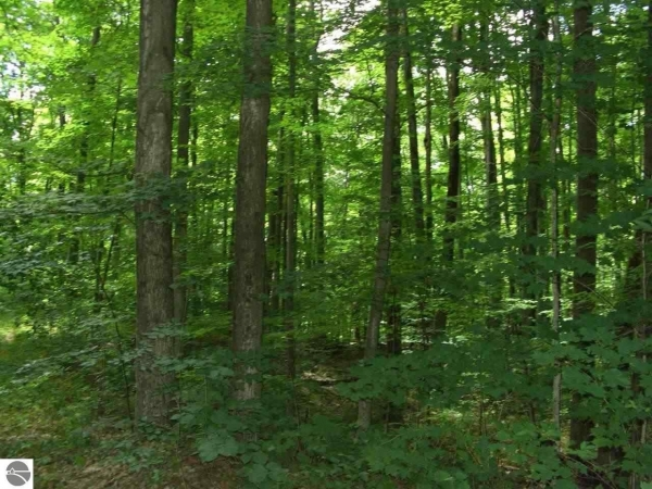 Listing Image #2 - Land for sale at Entwood Lane, Fife Lake MI 49633