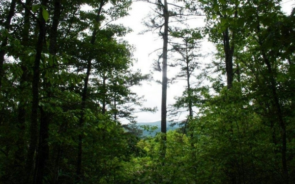 Listing Image #1 - Land for sale at L 401 Little Hiawatha Tr, Blue Ridge GA 30513