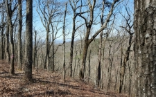 Listing Image #2 - Land for sale at LT216 Falling Waters, Ellijay GA 30540