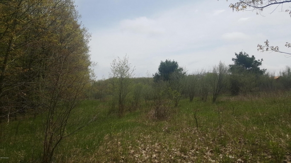 Listing Image #1 - Land for sale at 15716 W Gates Road, Howard City MI 49329