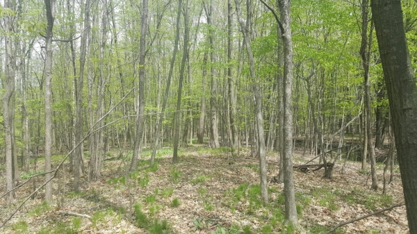 Listing Image #2 - Land for sale at 15716 W Gates Road, Howard City MI 49329
