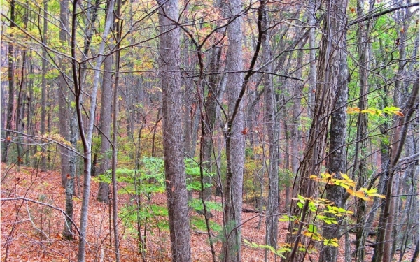 Listing Image #1 - Land for sale at 5.95A Alp Ln, Blue Ridge GA 30513
